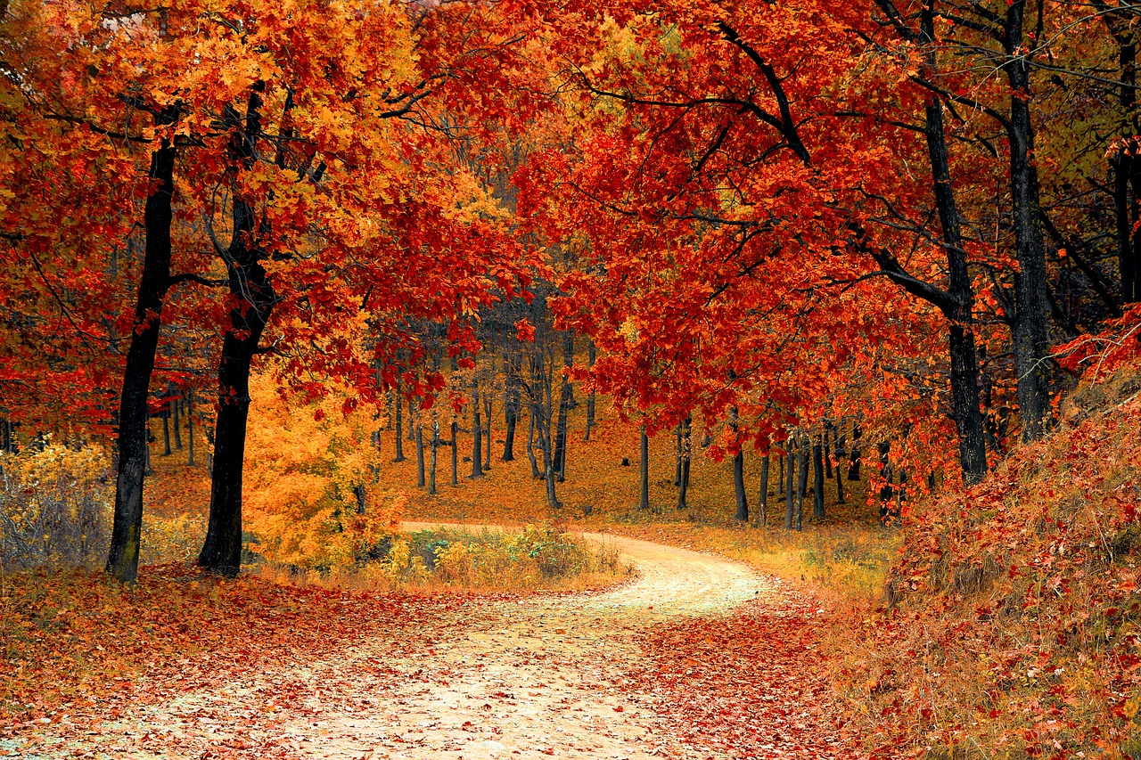 Color Sunday Fall Leaf Peeping Driving Tips