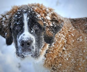 Pet Safe De-icing products