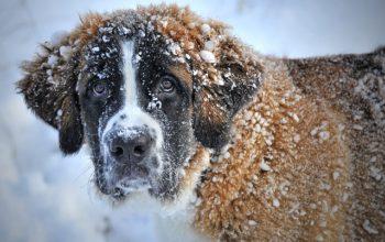Pet Safe De-icing products